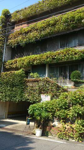 植物がいっぱいの建物が当店です